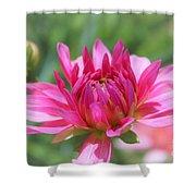 Pink Dahlia Beauty Shower Curtain