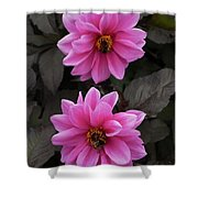 Pink Dahlias With Bees Shower Curtain