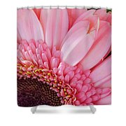 Pink Daisy Close-up Shower Curtain