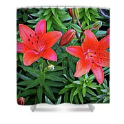 Pink Daylilies Shower Curtain