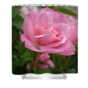 Pink Delicacy  Shower Curtain
