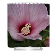 Pink Delicate Hibiscus Shower Curtain