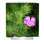 Pink Dianthus With Nigella Buds Shower Curtain