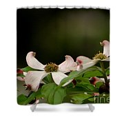 New Orleans Pink Dogwood Equinox Shower Curtain