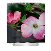 Pink Dogwood In The Morning Light Shower Curtain