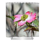 Pink Dogwood Shower Curtain by Kerri Farley
