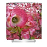 Pink Dogwood Tree Flowers Dogwood Flowers Giclee Art Prints Baslee Troutman Shower Curtain