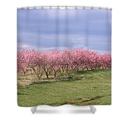 Pink Pear Trees Shower Curtain