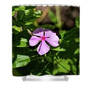 Pink Downy Phlox Wildflower Shower Curtain