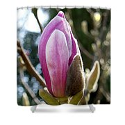 Pink Early Bloom  Shower Curtain