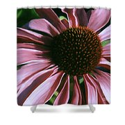 Pink Echinacea Shower Curtain