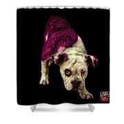 Pink English Bulldog Dog Art - 1368 - Bb Shower Curtain