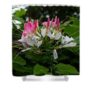 Pink Explosion Of Spring Shower Curtain