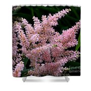Pink Expressions Shower Curtain