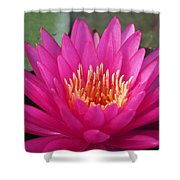 Pink Flame Waterlily Shower Curtain