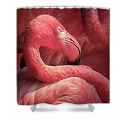 Pink Flamingo Fort Worth Zoo Shower Curtain by Robert Bellomy