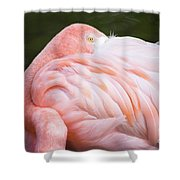 Pink Flamingo Hiding Its Head On Its Plumage. Shower Curtain