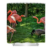 Pink Flamingos And Imposters Shower Curtain