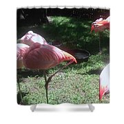 Pink Flamingos Resting Shower Curtain