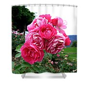 Pink Floribunda Roses Shower Curtain