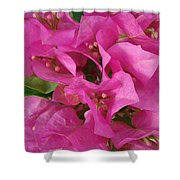 Pink Flower Composition Shower Curtain