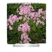Pink Flower Cross Shower Curtain