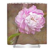 Dwarf Flowering Almond Romantic Floral Shower Curtain