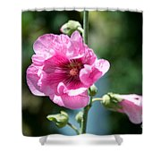 Pink Flower Shower Curtain by Yew Kwang