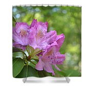 Pink Flowering Rhododendron Bush In Full Bloom Shower Curtain