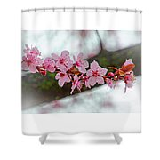 Pink Flowering Tree - Crabapple With Drops Shower Curtain