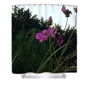 Pink Flowers In Front Of Trees Shower Curtain