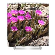 Pink Flowers In The Desert Shower Curtain