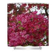 Pink Flowers On Blooming Tree Shower Curtain