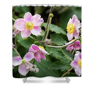 Pink Flowers Over Green Shower Curtain