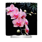 Pink Flowers Pink Vein Black Background Shower Curtain