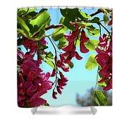 Pink Flowers Virginia City Nv Shower Curtain