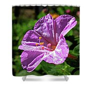 Pink Four O'clock Shower Curtain