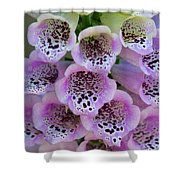 Pink Foxglove  Shower Curtain