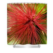 Pink Fringe Shower Curtain