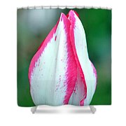 Pink Fringed Shower Curtain