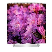 Pink From Heart Shower Curtain