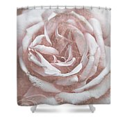 Pink Garden Rose Shower Curtain