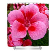 Pink Geranium Blossom Shower Curtain