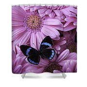 Pink Gerbera Daises And Butterfly Shower Curtain