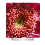 Pink Gerbera Daisy Shower Curtain