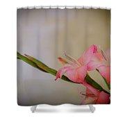 Pink Gladiola Shower Curtain