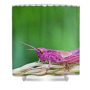 Pink Grasshopper Shower Curtain