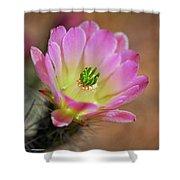 Pink Hedgehog Cactus Shower Curtain