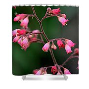 Pink Heuchera Flower 1 Shower Curtain