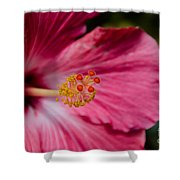 Pink Hibiscus Close-up Shower Curtain
